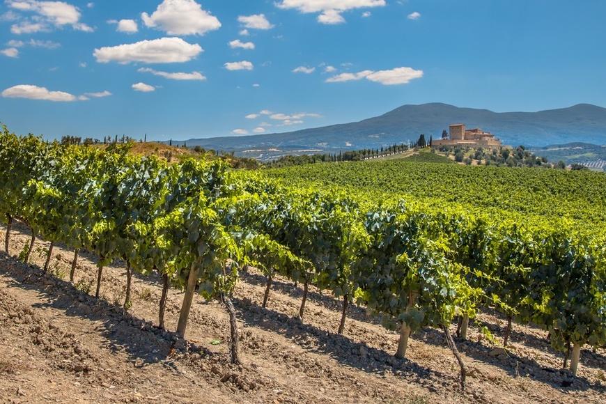 Виноградники Европы
