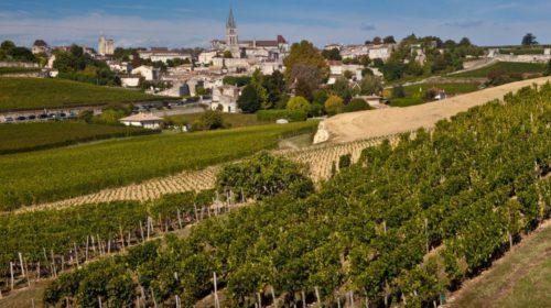 Французские виноделы создают супервиноград