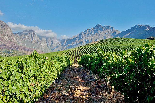 Южная Африка возобновляет экспорт вина